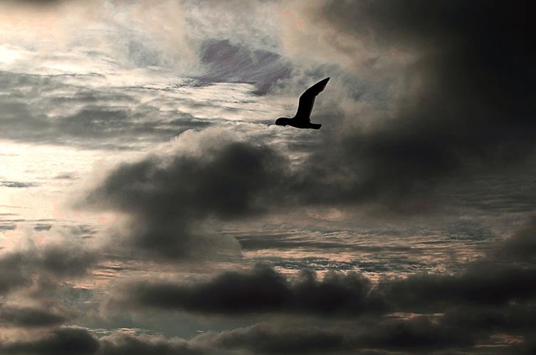 2015 palanga birds_9 w